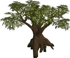 Fruit Trees Runescape - blossoming tree runescape wiki fandom powered by wikia