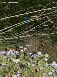 texas native plants landscaping texas native plant week garden vignettes my gardener says u2026