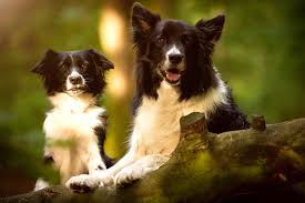 Cute Dogs Wallpapers by Dog Wallpapers Dog Desktop Images Animal Background Images
