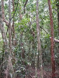 hardwood hammock everglades national park u s national park