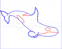how to draw a killer whale step by step sea animals animals