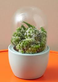 118 best aquariums u0026 terrariums images on pinterest plants