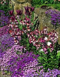 wall flowers wallflowers will add a magnificent splash of colour to your