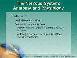 Ans Anatomy And Physiology Chapter 7 Anatomy And Physiology Introduction Anatomy Is The