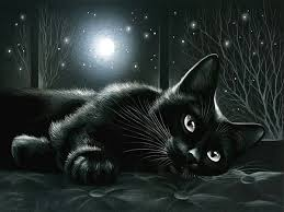 cat moonlight trees moon black cat cats pictures hd