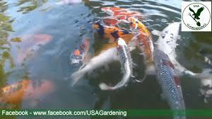 koi fish pond water garden ideas youtube