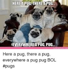 Funny Pug Memes - 25 best memes about funny pug funny pug memes