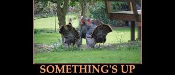 thanksgiving myths and facts