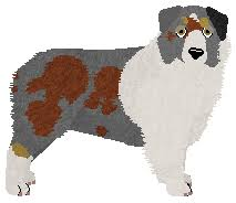 petz 5 australian shepherd blue eyes big dog show apkc bckc forum