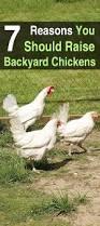 Backyard Chicken Farming by 216 Best Backyard Chickens Images On Pinterest Backyard Chickens