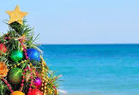 where to find local hawaii christmas trees hawaii magazine