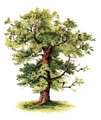 oak tree vector clip art free free vector for free download about