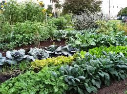 wonderful winter vegetable garden organic winter vegetable garden