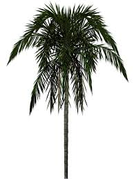 palm tree png images download free pictures