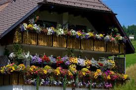 Blumen Baden Baden Ein Typisches Schwarzwaldhaus Mit So Vielen Blumen Hätten Wir Auch