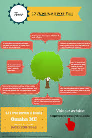 10 amazing fact about trees visual ly