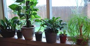 plants native to egypt best air cleaning plants recommended by nasa