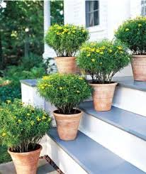 Ideas For Container Gardens Easy Container Gardens Real Simple