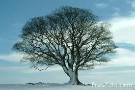 tree in winter pictures free use image 15 01 13 by freefoto