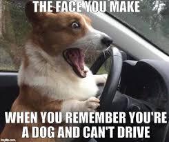 Dog Bacon Meme - dog driving meme 28 images dog memes funny collection of dog