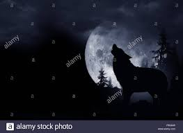howling wolf dark background full moon and the wilderness stock
