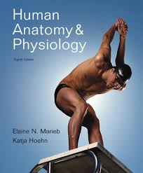 human anatomy and physiology marieb 8th edition bwinsscpt com