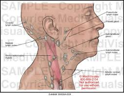 Anatomy Slides Human Anatomy Histology Image Collections Learn Human Anatomy Image