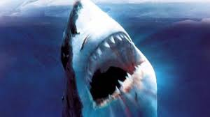biggest megalodon shark world s biggest shark ever megalodon