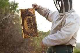 new threats to honeybees put u s food supply at risk star tribune