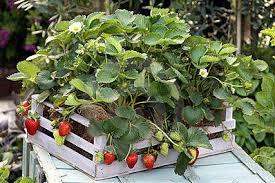 enjoy container gardening