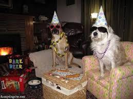 dog birthday party dog birthday party funnydogsite