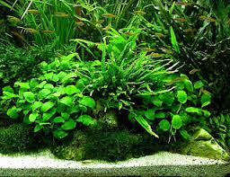 Most Beautiful Aquascapes Aquatic Eden Aquascaping Aquarium Blog