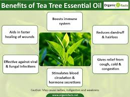 Essential Oils For Hair Loss 13 Amazing Tea Tree Oil Benefits Organic Facts