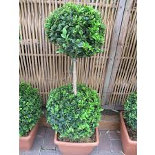 What Is A Topiary Topiary Buxus Box Hedging Garden Flowers U0026 Plants Bents