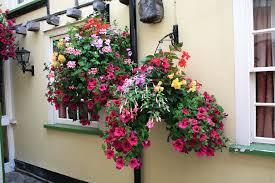 Best Plants For Hanging Baskets by Plants For A Hanging Basket Baskets Plants Suitable For A Hanging