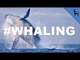 Whaling Meme - whales tree lyrics