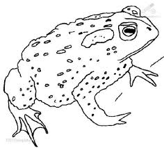 10 pics of frog and toad together coloring pages frog and toad
