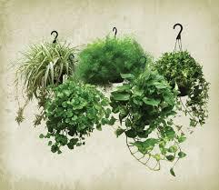 benefits of houseplants home design indoor plants low light common houseplants and best