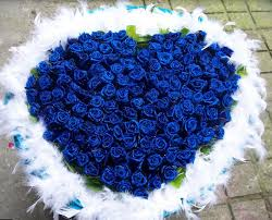 white and blue roses roses valentines heart shape unique bouquet with white feathers
