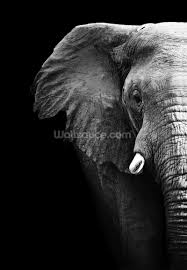 elephant close up wallpaper wall mural wallsauce usa elephant close up wall mural photo wallpaper