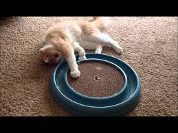 Cat Scratcher Replacement Pads Creme Brulee The Cat Playing With Bergan Turbo Scratcher Cat Toy