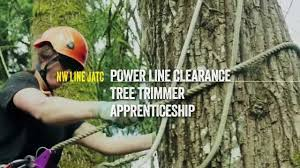 power line clearance tree trimmer apprenticeship
