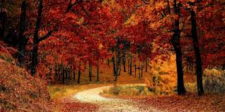 fall autumn fall autumn red season nature hd wallpapers wallpapers corp