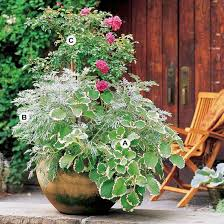 Fragrant Container Plants - 64 best outdoor container gardens images on pinterest flower