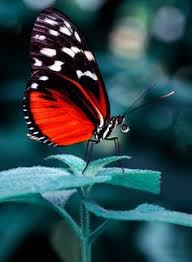 butterfly touch of color color my