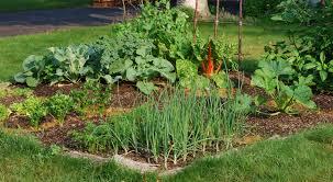 Garden Planning 101 My Mother Kitchen Gardening 101 How To Grow Your Own Food U2013 Seedmoney
