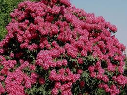 tree flowers dals wildlife site wildlife of northern