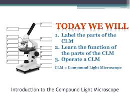 compound light microscope function ppt introduction to the compound light microscope powerpoint