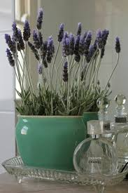 Fragrant Indoor House Plants - best 25 bathroom plants ideas on pinterest plants in bathroom