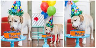 dog birthday party baxter s 7th birthday dog birthday party